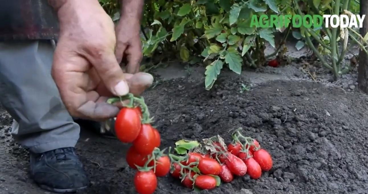Comunicato_Citynews_AgriFoodToday (3)-2