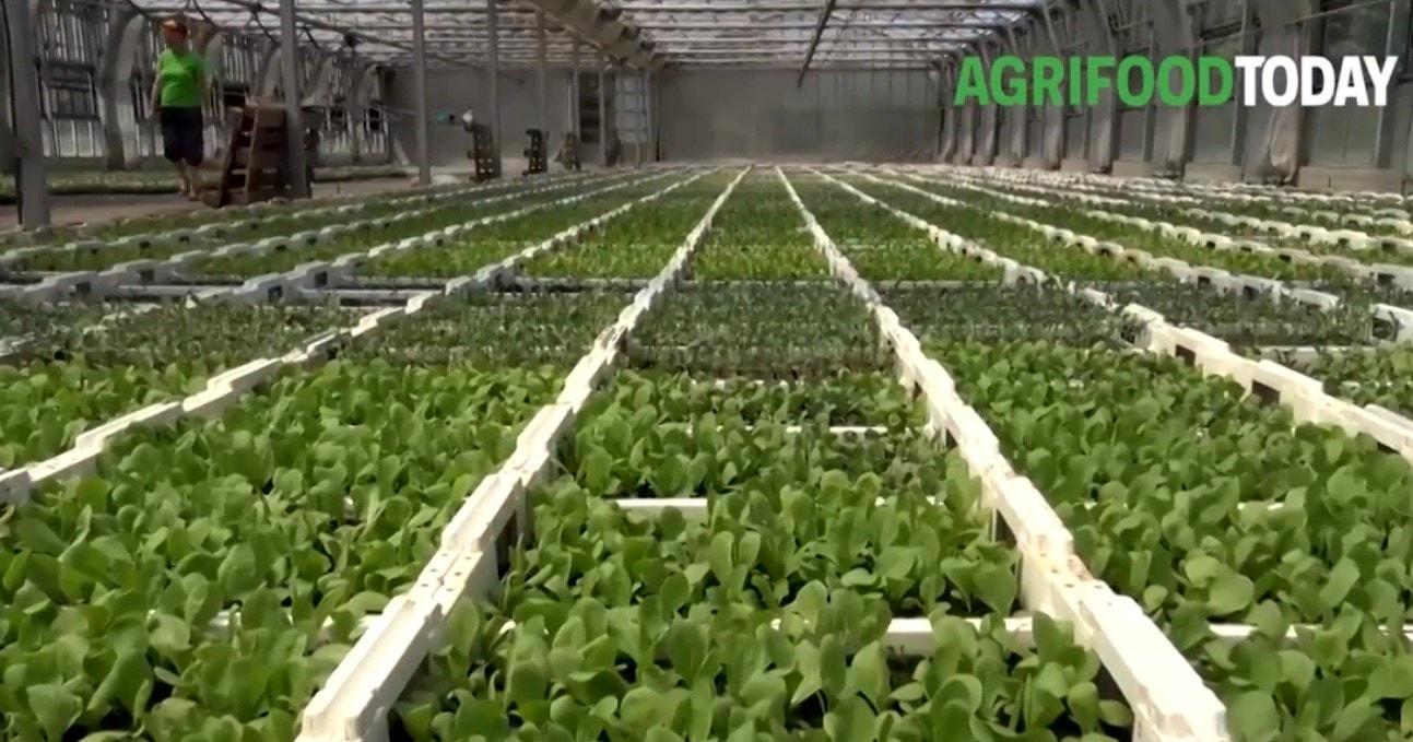 Comunicato_Citynews_AgriFoodToday (5)-2