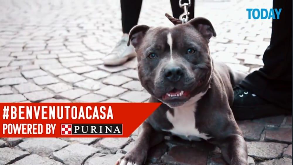 Citynews al fianco di Purina nella prima edizione della Milano Pet Week