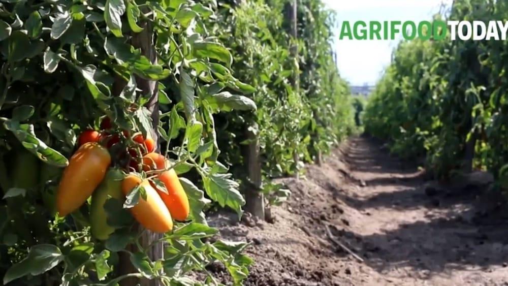 Citynews lancia AgriFoodToday per raccontare il settore agroalimentare italiano e le politiche europee in materia